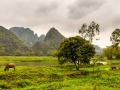 Water Buffalo Hoa Lu - Tam Coc Vietnam