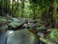 Mt-Tamborine-Stream